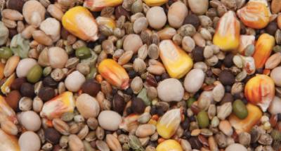консервированное зерно