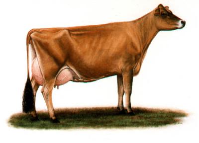 ПРЕМИКС  для коров в сухостойный период