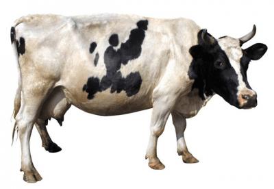 премикс для высокопродуктивных коров с удоем за лактацию 8000 кг