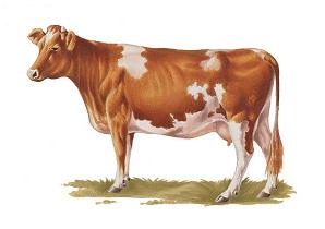 премикс для коров в стойловый период
