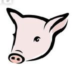 свинья, свиньи, комбикорм для свиней, комбикорм для поросят