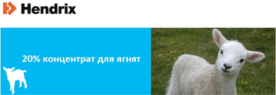 bvmk-dlj-jagnjat